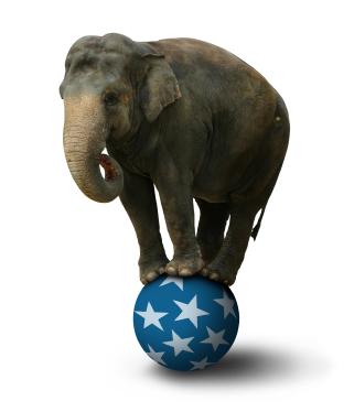 elephant balancing on ball en annan jessica